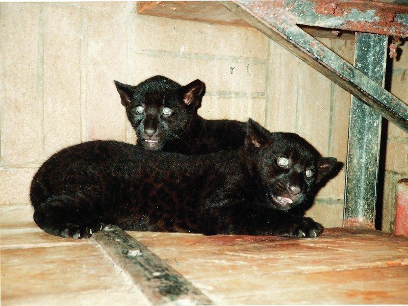 Sponzorovali jsme malé jaguáry
